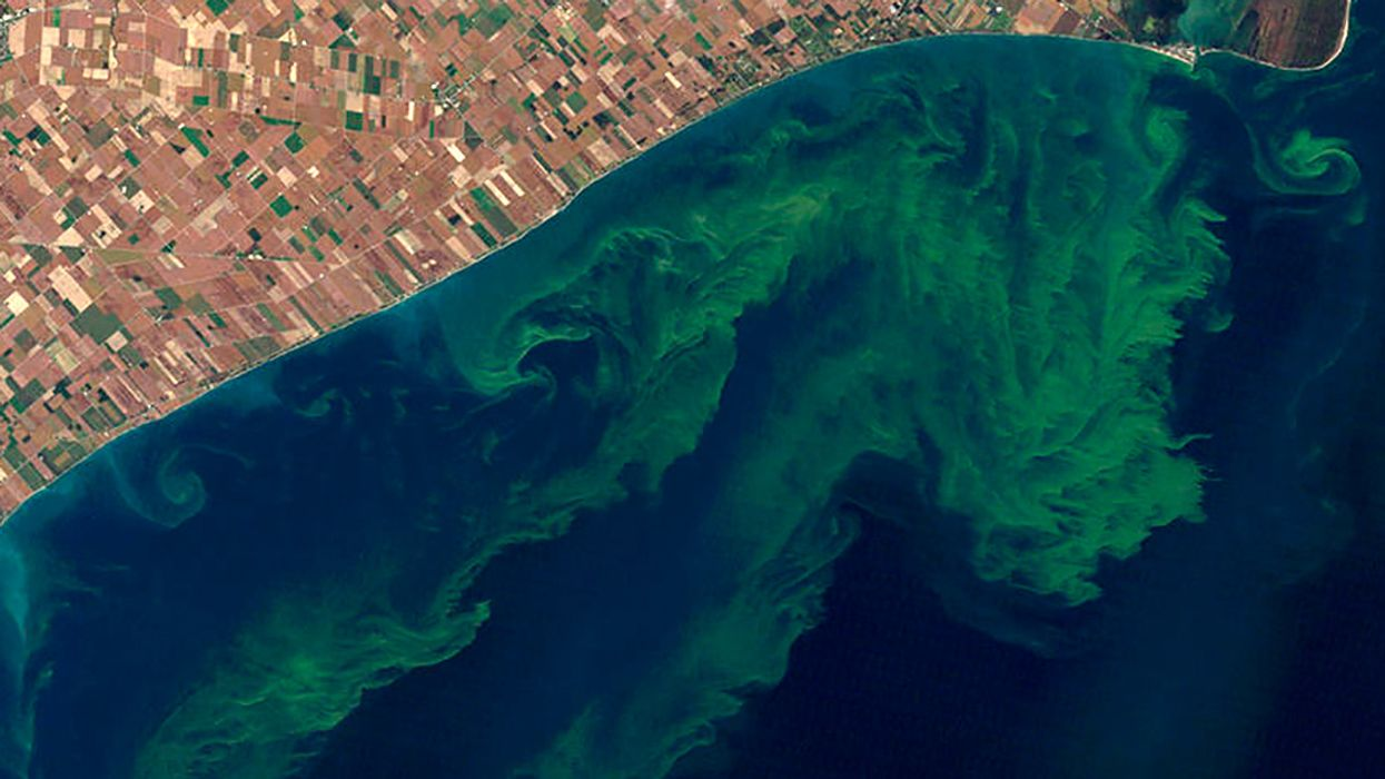 This Fourth of July, You'll See 70% More Algae Outbreaks Than Last Year