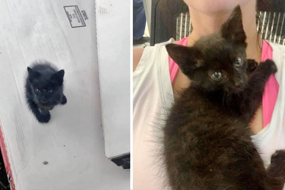 Stray Kitten Wanders Up to Family's Home - They Find Him Help and a Friend too