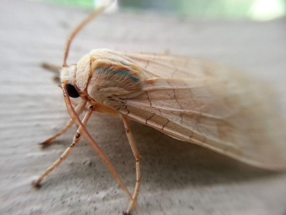 A New Weapon in Colombia's War on Drugs: Cocaine-Eating Moths