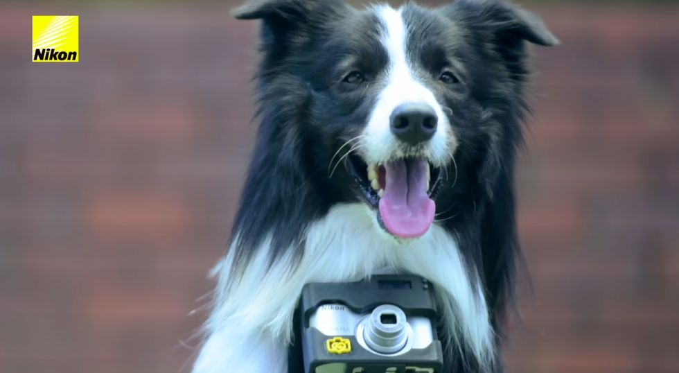Your Dog's Heartbeat Is the Key to This New Canine Camera System