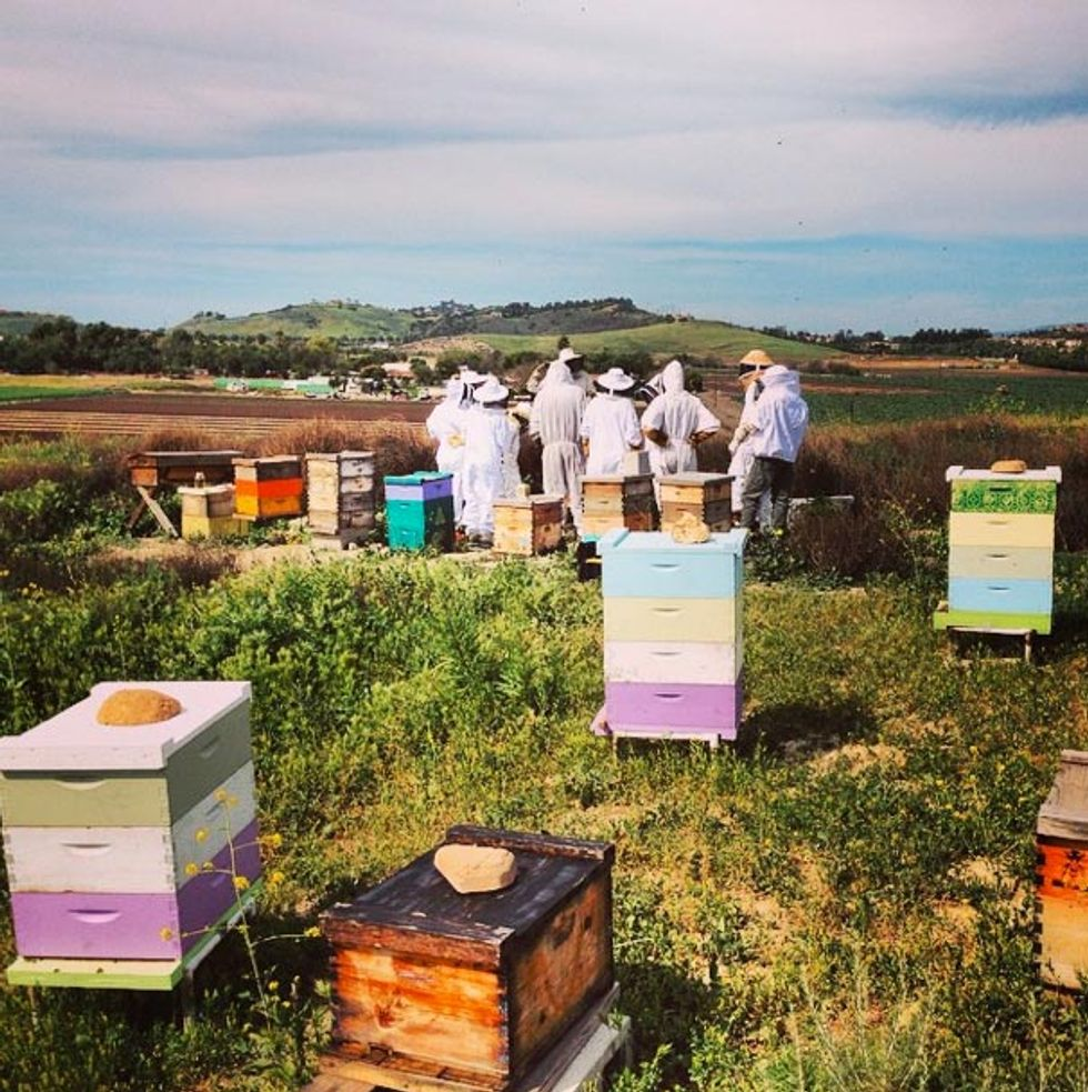 Ask the Bees: How Collaborative Learning Teaches Us to Think Critically