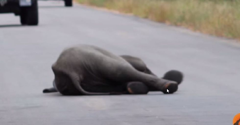 Elephant Herd Helps Fallen Baby Make it Across a Highway