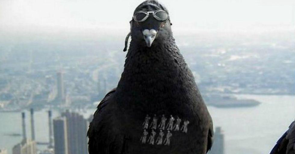 Internet Goes Wild After India Detains Pakistani Spy Pigeon
