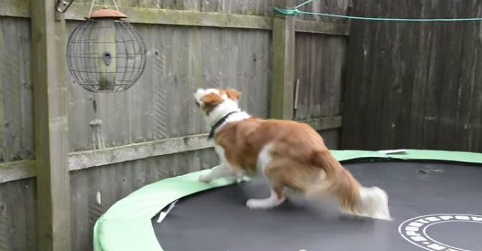 Amazing Dog Hops Over a Fence and Onto a Train to Track Down His Owner
