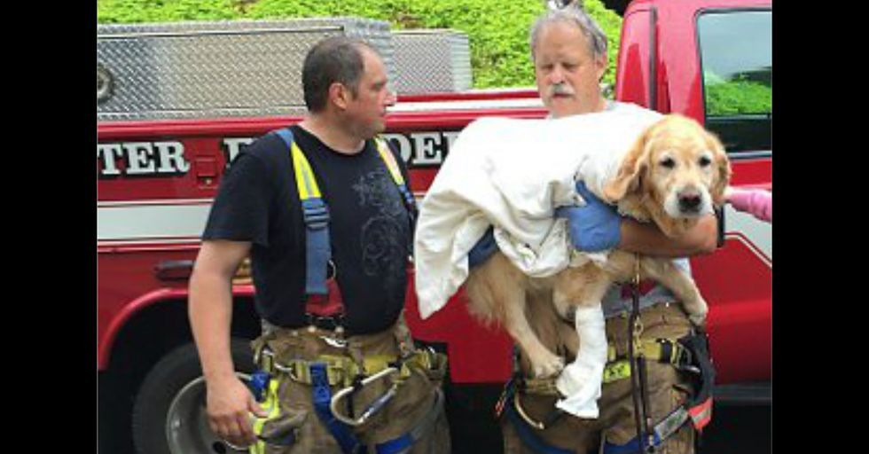 Service Dog Jumps in Front of Oncoming Busto Save Blind Owner
