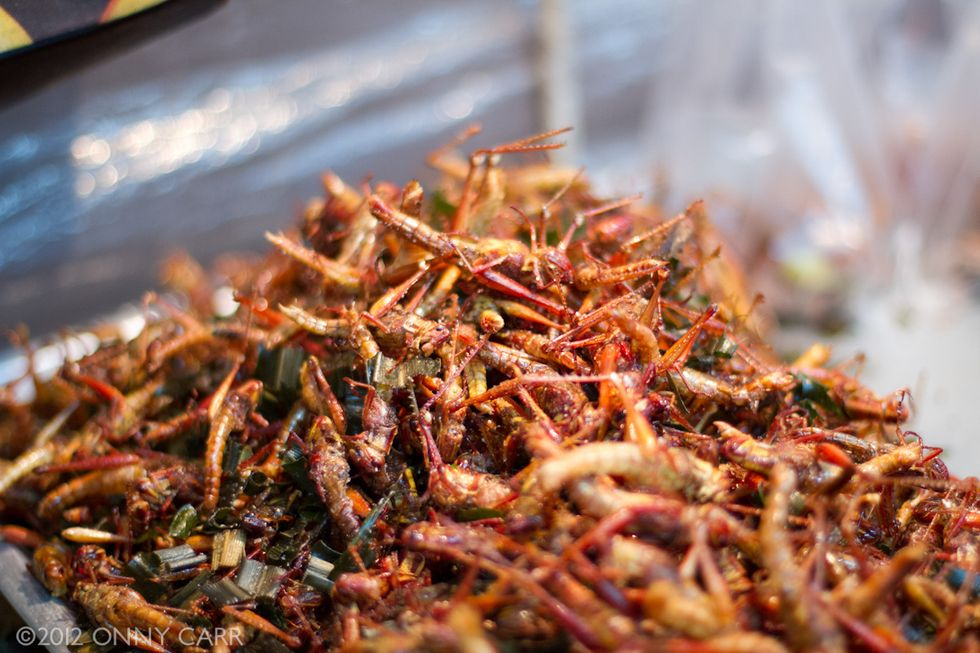 The Future of Nutrition is Vacuum-Sealed, Powdery, and Full of Insects