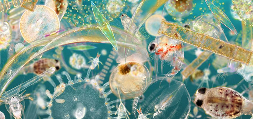 How Citizen Science Is Saving Our Oceans