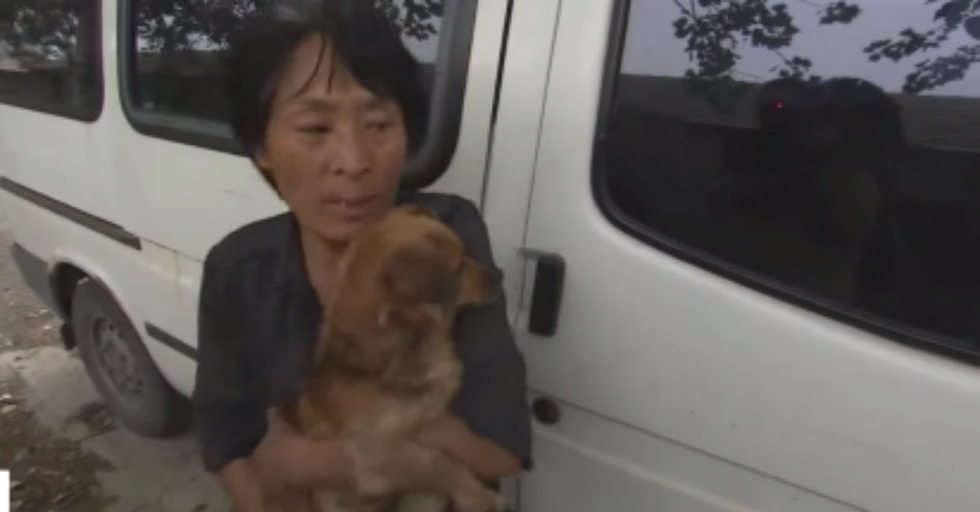 Woman Saves 100 Dogs From Being Eaten at Dog-Meat Festival
