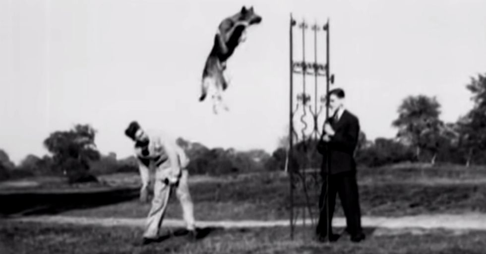 85-Year-Old Film Shows The World's Most Incredible Dog.