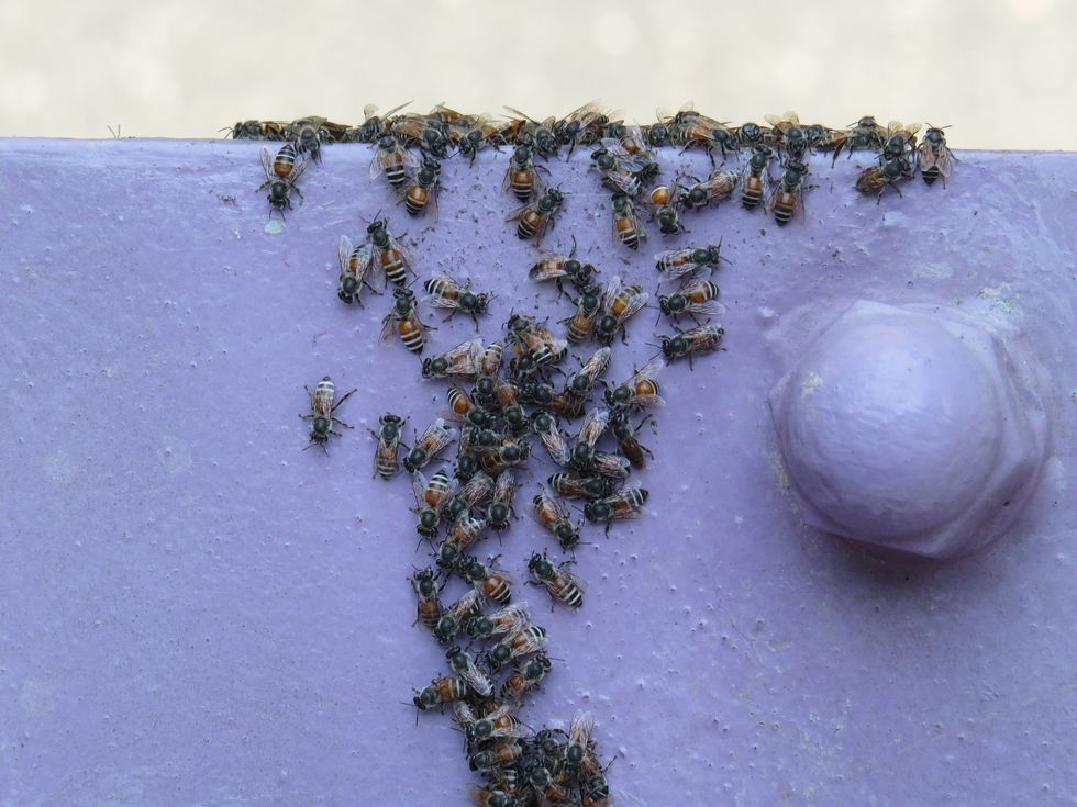 """Oslo Is Abuzz at Being the First City with an Exclusive """"Bee Highway"""""""