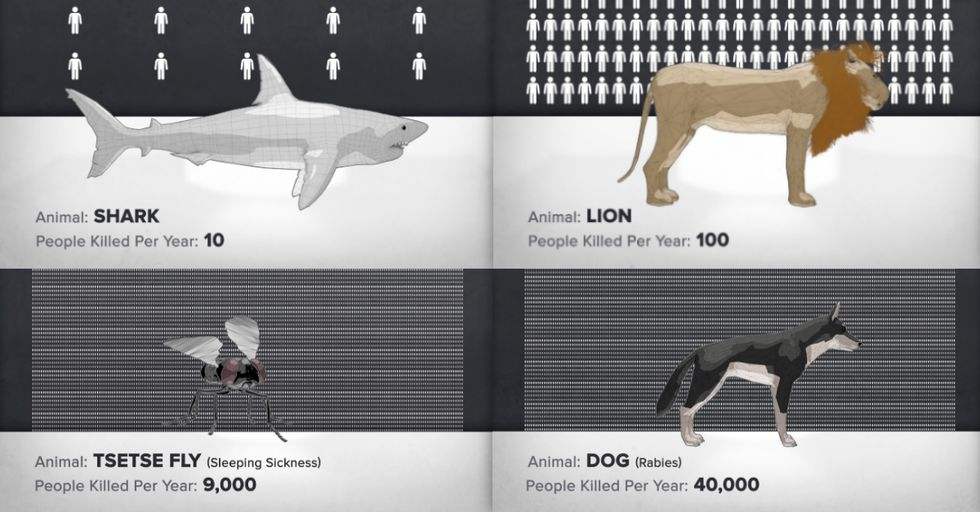 The World's Deadliest Animal Is Probably Not What You Think It Is