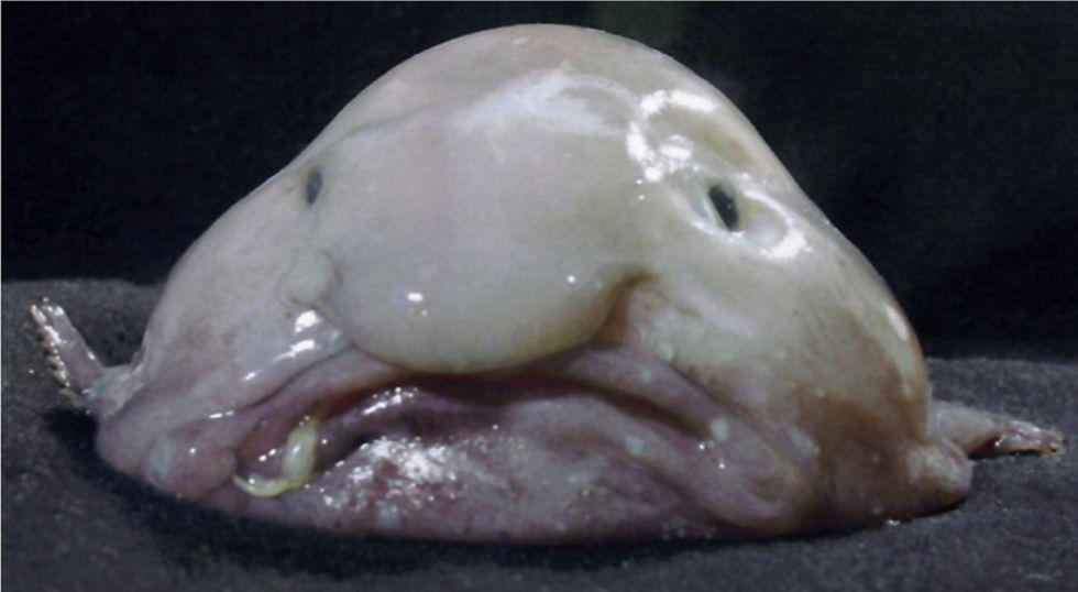 "Pop-Up Cafe Aims to Redeem Misunderstood ""World's Ugliest Fish"""