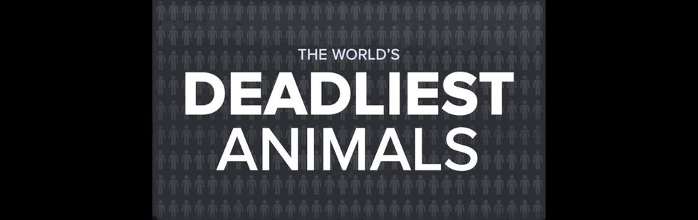 Watch and Learn Which Animal is Most Likely to Kill You This Summer