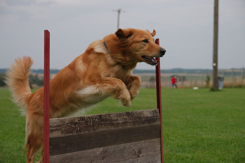 How Stem Cell Therapy Might Change Your Dog's Life