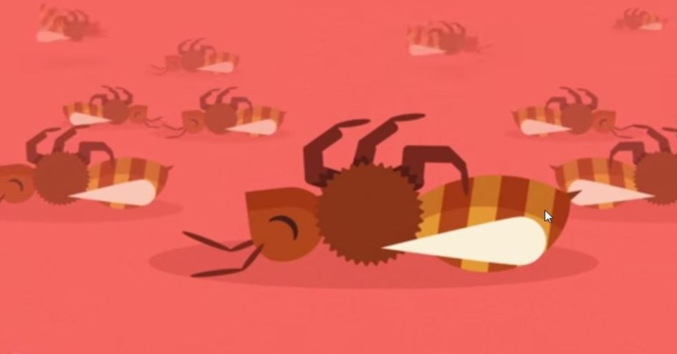 New Video Perfectly Illustrates Why Bees are Dying