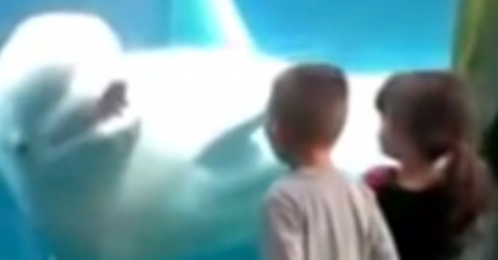 Amazing Video Captures Whale Scaring Kids at the Aquarium. But Is it Playing?