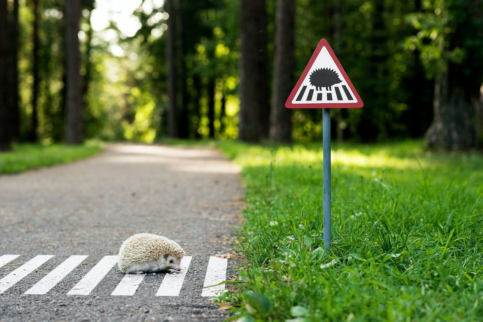 Tiny Animal Street Signs Remind Us to Share Our Roads With Nature