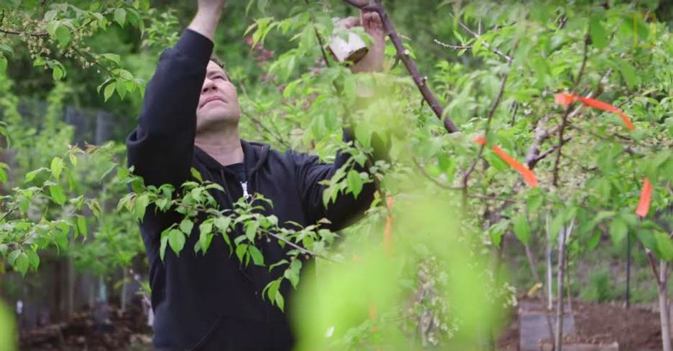 This Guy Created an Amazing Tree That Grows 40 Different Kinds of Fruit