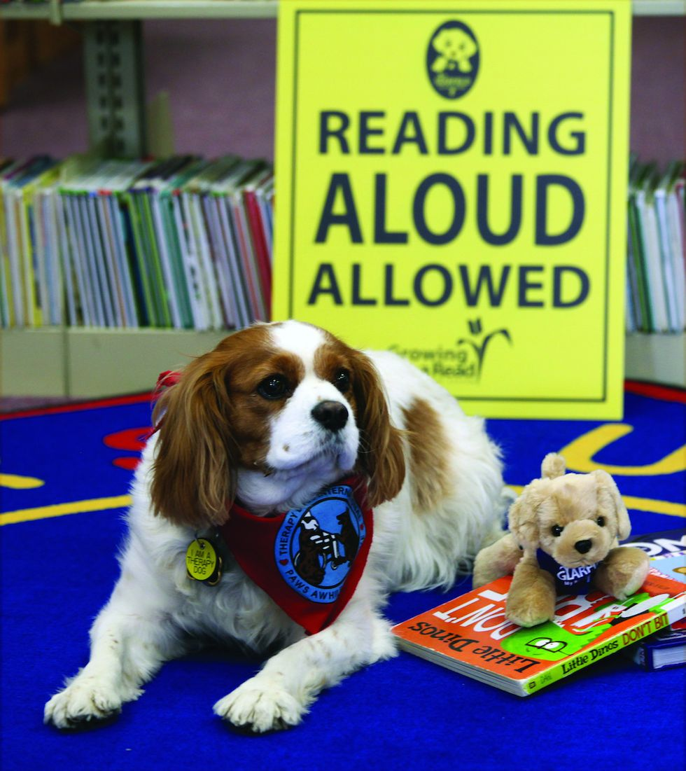 To Foster a Love of Reading, Bring an Animal to the Classroom