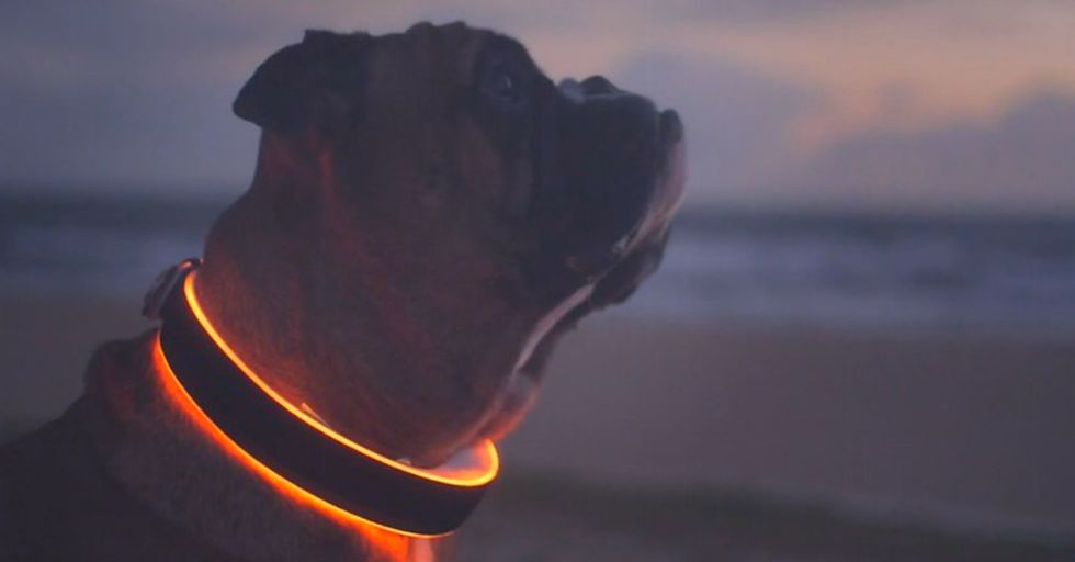 "Next Stop For ""The Internet of Things""—Your Dog's Collar"