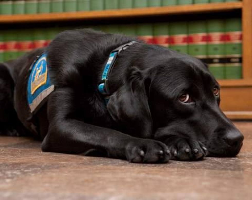 Meet the Courthouse Dogs Who Help Traumatized Witnesses Testify at Trial