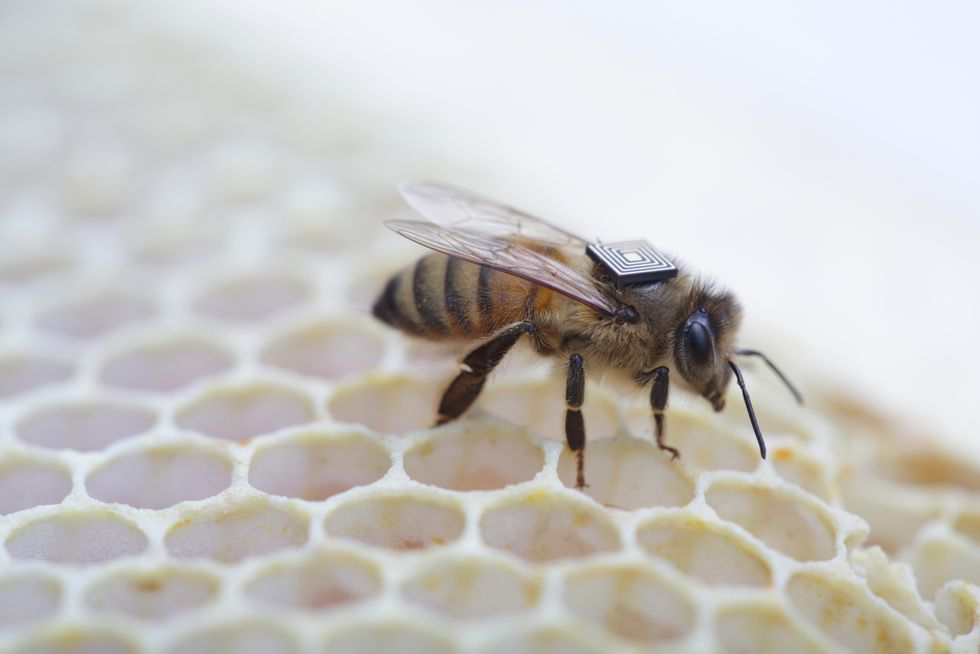 Why Scientists Are Outfitting Bees with Teeny, Tiny Backpacks