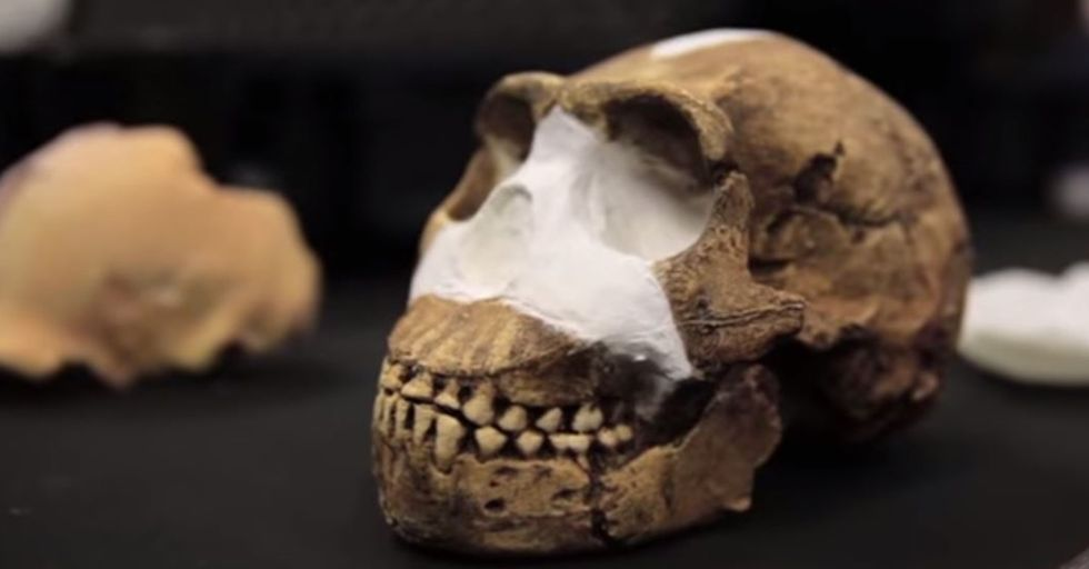 Scientists Discover a New Species of Human Ancestor in a South African Cave
