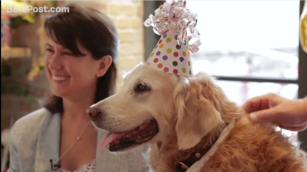 New York Turns Out to Celebrate the Last Living 9/11 Rescue Dog's 16th Birthday