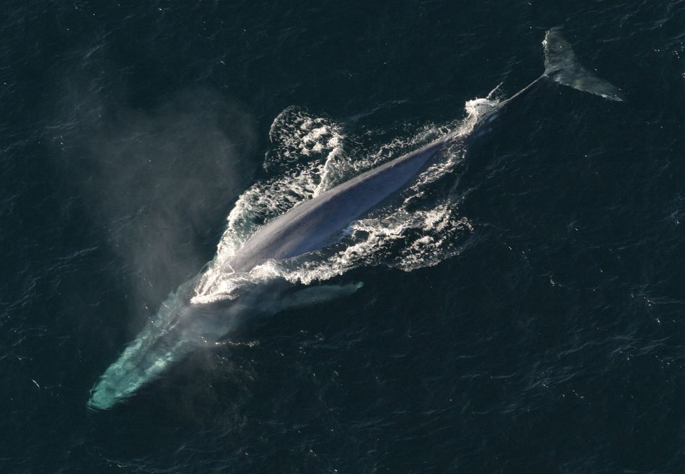 The Whales Will Approve of the Navy's New Sonar Policy