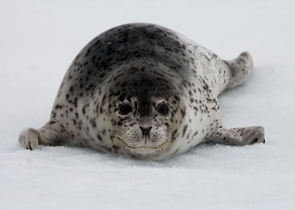 The Animals Saved by Shell's Decision to End Offshore Drilling in the U.S. Arctic