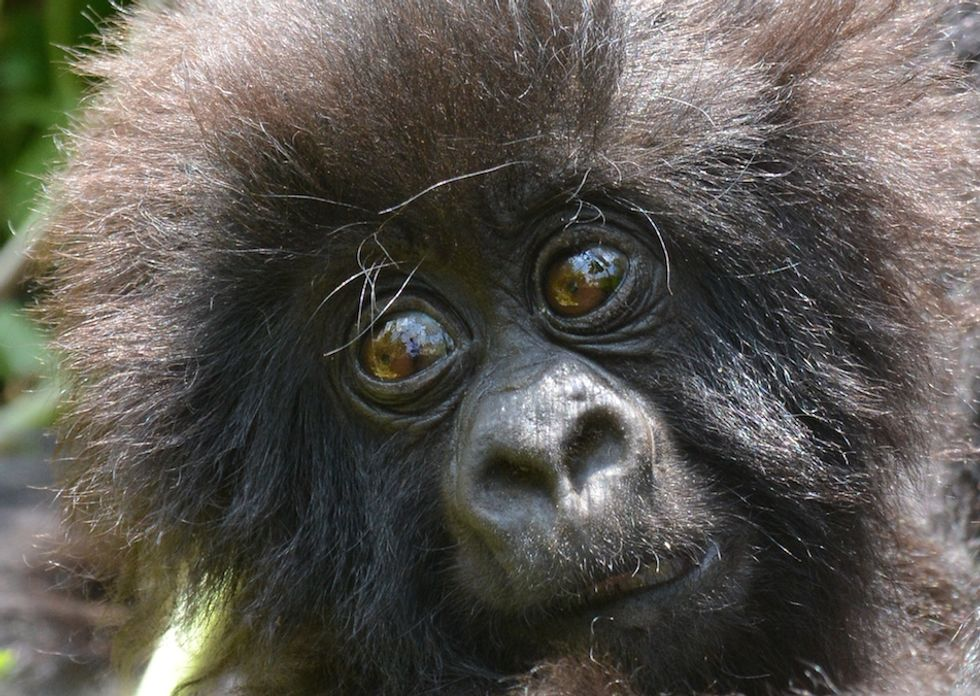 Why Rwanda Gives Each of Its Baby Gorillas a Name