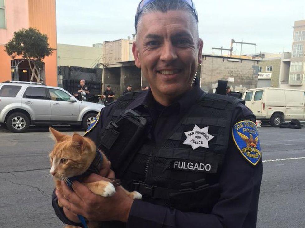 Hero Cat Ends Suicide Standoff