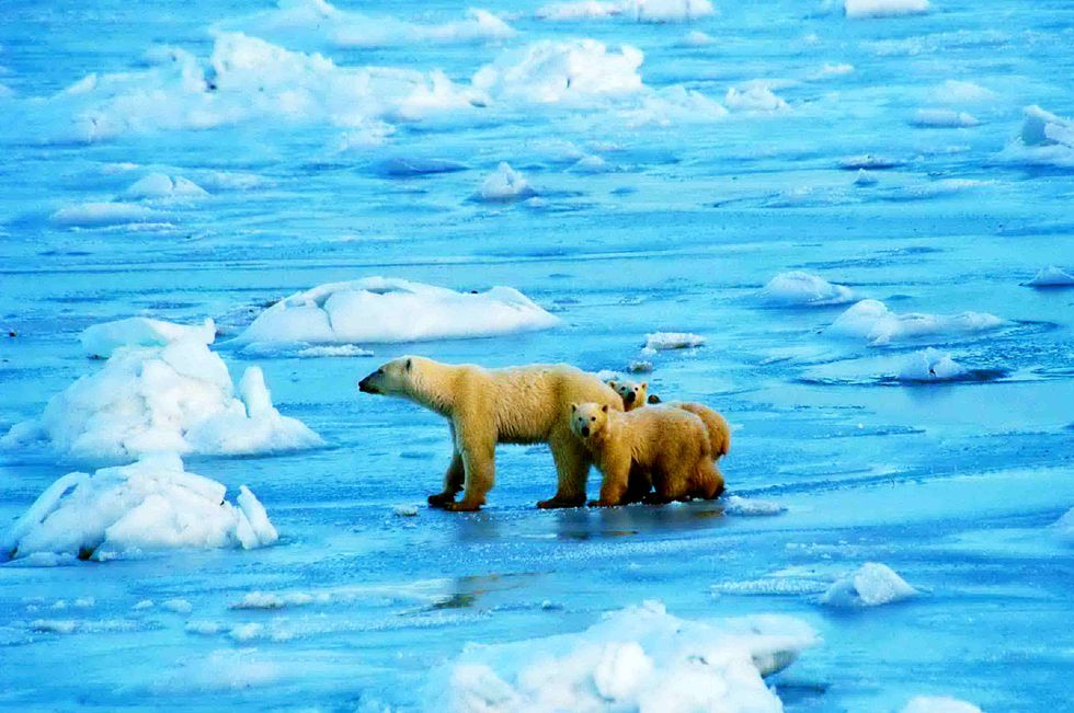 U.S. Government Moves to Limit Offshore Drilling in the Arctic