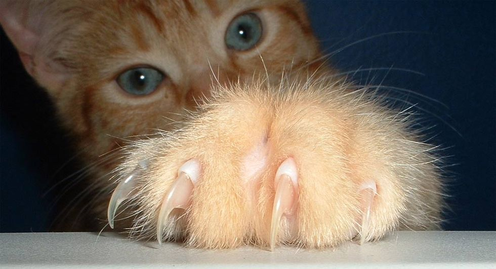 Why Anti-Declawing Activists Torpedoed the 'America's Favorite Veterinarian' Contest