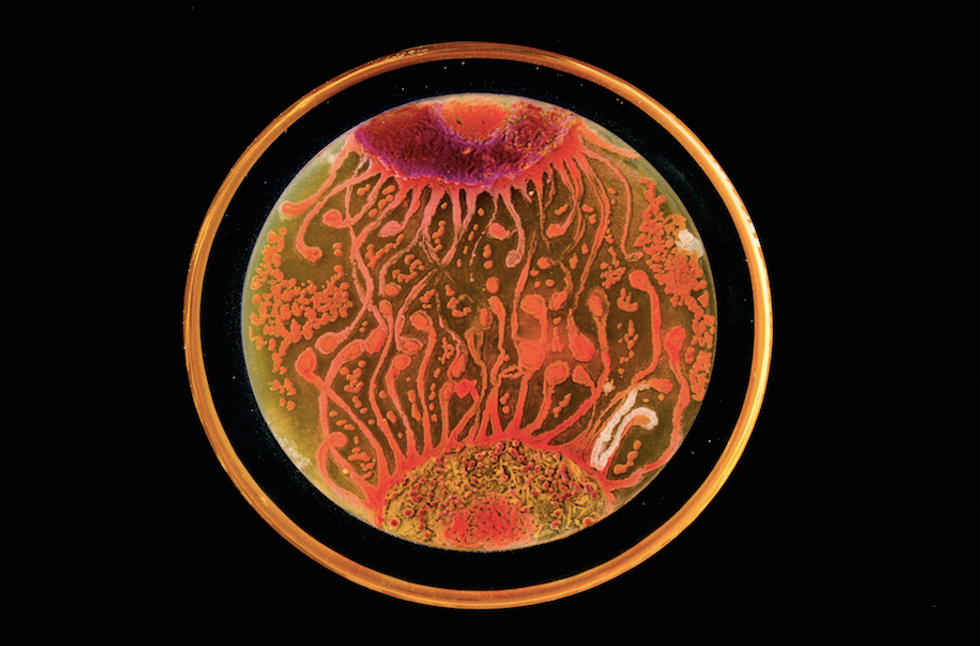 This Gorgeous Art Is Made From Microbes