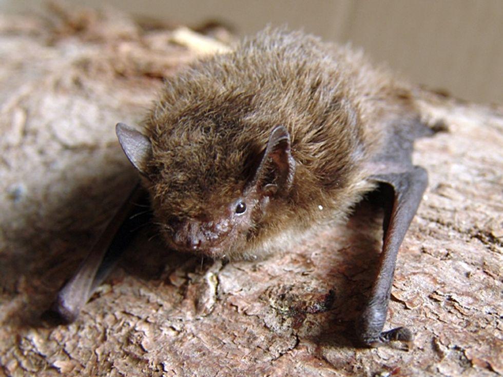A Dutch Bridge Built for Bats