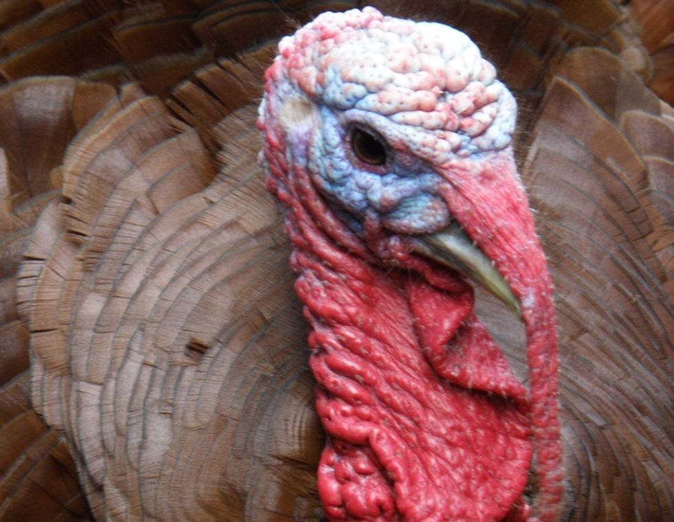 How to Have a Healthy, Ethical Thanksgiving