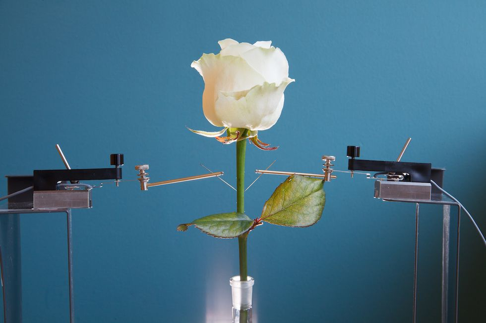 Scientists Create Color-Changing Cyborg Flowers
