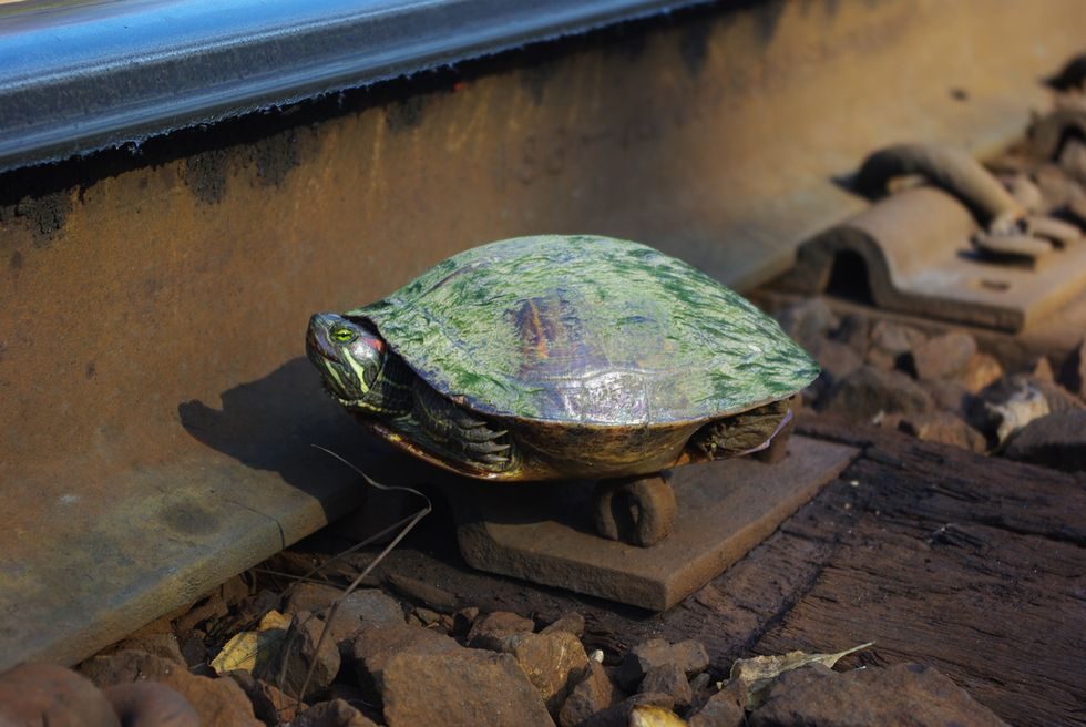 Japanese Aquarium Teams Up With Railroad Company to Save Local Turtles by Building Tunnels Between Train Tracks