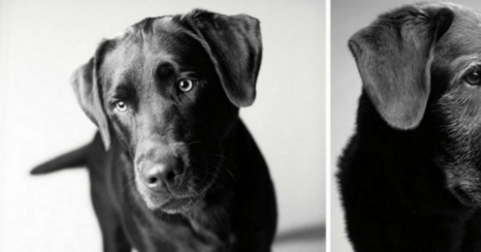 Touching Photography Project Illustrates How Dogs Age