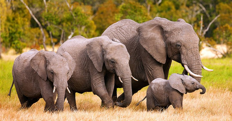 The Price of Ivory in China Has Dropped 50 Percent