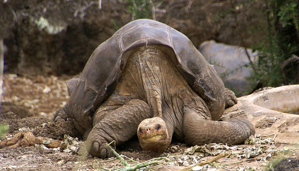 This Tortoise Is Extinct. Scientists Think They Might Be Able to Bring It Back