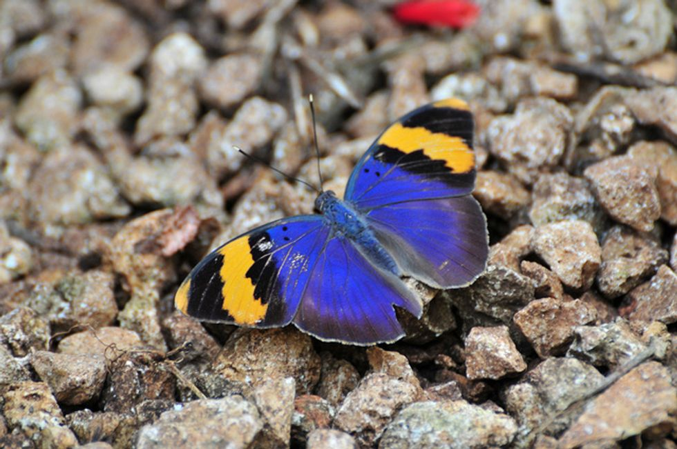 How Zanzibar's Butterfly Farmers Are Saving the Environment