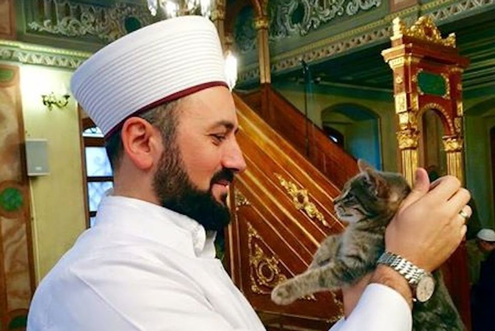 This Winter, an Imam Is Offering Shelter to Stray Cats in Istanbul