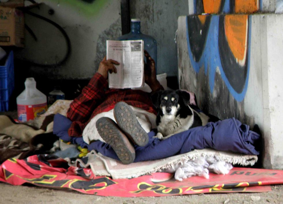 Why the Homeless Need Their Pets