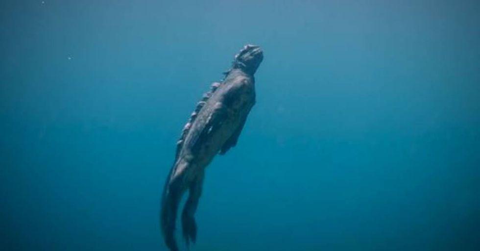 The Marine Iguana is a Terrifying Creature