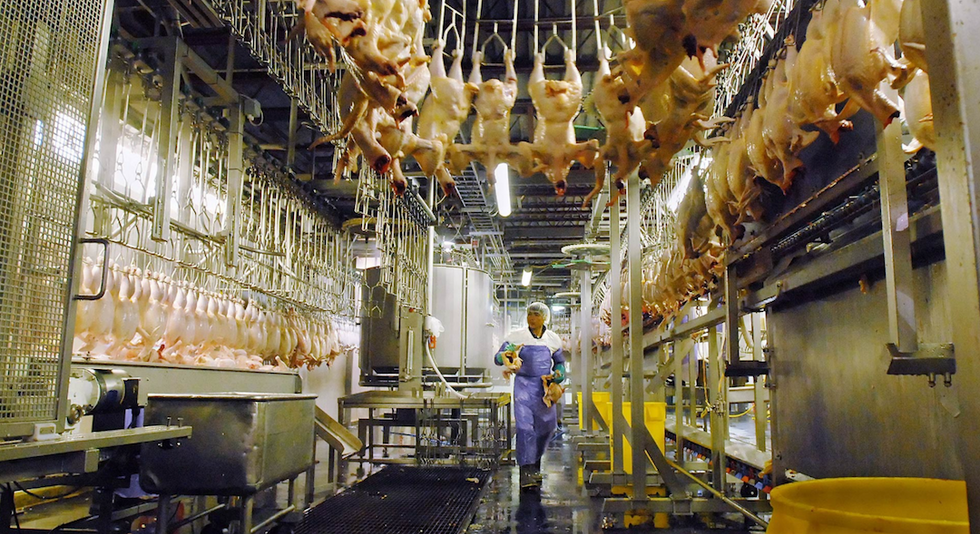 4 Brands of Chicken You Shouldn't Buy If You Care About Workers' Rights