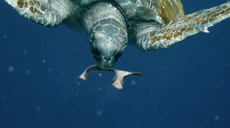 Brewery Produces Six-Pack Rings That Turtles Can Eat