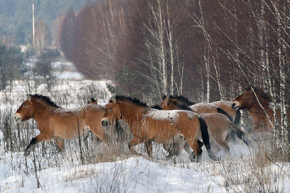 WhatChernobyl's Wildlife Can Teach Humans