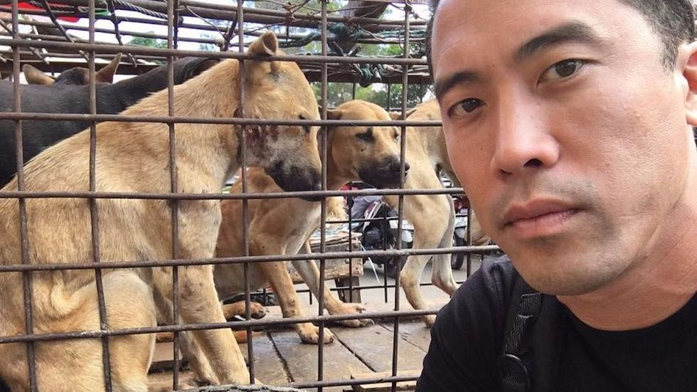 Man Rescues 1,000 Dogs From China's Dog Meat Festival